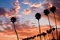 Four Palm Sunset Stock Images - 6146784