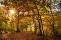 Colors Of Autumn In The Forest. Landscape With Colored Leaves And The Sun Through Trees. Autumn Background Stock Image - 61420161