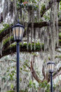 Two Lamps And Spanish Moss Stock Photos - 61449123