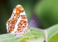 Map Butterfly Stock Photos - 61478493