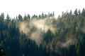 Light Through Patches Of Fog In The Forest Royalty Free Stock Images - 61490779