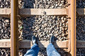 Taking A Walk Down The Rail Tracks Stock Images - 6153954