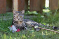 Cat Playing Stock Photography - 61512672