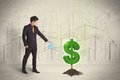 Business Man Poring Water On Dollar Tree Sign On City Background Stock Photography - 61529032