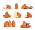 A Collection Of Almonds Royalty Free Stock Images - 61560749