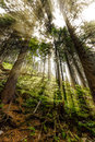 Late Summer Sunlight Breaking Through The Trees At A Mystical Lane Stock Photography - 61571732