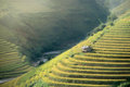 Rice Fields On Terraced Of Mu Cang Chai, YenBai, Vietnam. Rice F Stock Photography - 61592112