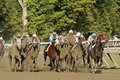 Field Of Racing Horses Royalty Free Stock Photography - 6165897
