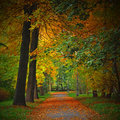 Autumn Colours Royalty Free Stock Images - 6170559
