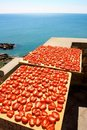 Dried Tomatoes Over The Sea Stock Photography - 6174592