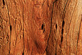 Old Wood Grain Royalty Free Stock Photo - 6179805