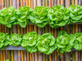 Vegetable In Decorated Wall Vertical Garden Idea Royalty Free Stock Images - 61705409