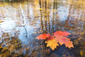 Detail Of Leaf In The Autumn Stock Images - 61707864