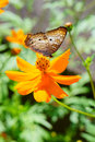 Butterfly On A Flower Stock Photography - 61775112