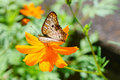 Butterfly On A Flower Royalty Free Stock Photo - 61775125