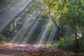 Morning Sun Rays Shining In The Autumn Forest Stock Images - 61799354