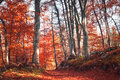 Lovely Red Color Autumn Season Forest Path Stock Photos - 61811713