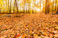 Fallen Leaves And Fall Foliage Stock Image - 61830191
