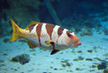 Tropical Fish On A Coral Reef Royalty Free Stock Photography - 61846927