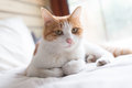 Cat On The Bed Royalty Free Stock Photography - 61854097