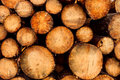 Stack Of Logs Royalty Free Stock Images - 61875649