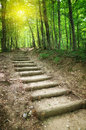 Way In Forest Royalty Free Stock Photos - 61891868