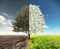 The Field And Money Tree Stock Photos - 61941943