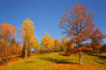 Lovely Countryside Trees With Autumn Colorful Leaves Stock Images - 61947454