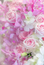 Variety Flower Background In Pastel Color Stock Photos - 61973673