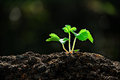 Young Plant Royalty Free Stock Image - 61976116