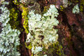 White Ferns On Tree In The Forest. Stock Photo - 61985400