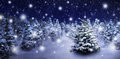 Fir Tree In Snowy Night Royalty Free Stock Images - 61991409