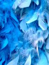 Blue Feathers Royalty Free Stock Images - 629799