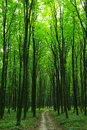 Green Forest Royalty Free Stock Photography - 6205747