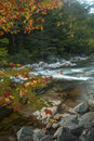 Vertical View Of Foliage And Swift River Rapids, New Hampshire. Royalty Free Stock Photo - 62009485
