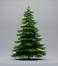 Spruce Tree On Gray Stock Images - 62054634