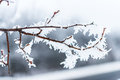 Ice Crystals On Tree Branches. Royalty Free Stock Photography - 62087027