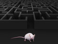 Mouse Maze Stock Photography - 62111112