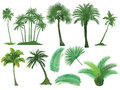 Palm Trees Royalty Free Stock Image - 62149996