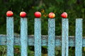 Apples Stock Photography - 62164192