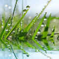 Fresh Green Grass With Dew Drops Closeup. Stock Photos - 62175363