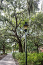 Lamp Post And Oak Tree By Sidewalk Stock Image - 62240341