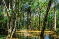 Flooded Trees In The Amazon Rainforest, Brazil Stock Image - 62268401
