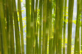 Backgrounds With Bamboo Foliage Royalty Free Stock Images - 62317369