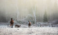 Horses In Their Corral On A Frosty November Morning. Royalty Free Stock Photos - 62346188