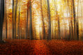 Magic Road In The Autumn Forest Royalty Free Stock Image - 62354516