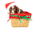 Santa Puppy In Christmas Basket Royalty Free Stock Images - 62370829