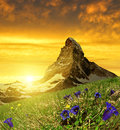 Beautiful Mountain Matterhorn In The Foreground Blooming Gentian At Sunset Stock Images - 62374614