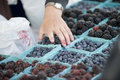 Farmers Market Berry Selection Stock Images - 6241984
