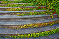 Staircase With Ivy Stock Photos - 6248943